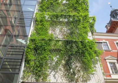 VERTICAL GREENING University of Natural Resources and Life Sciences Vienna