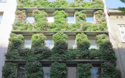 Facade greening as natural cooling