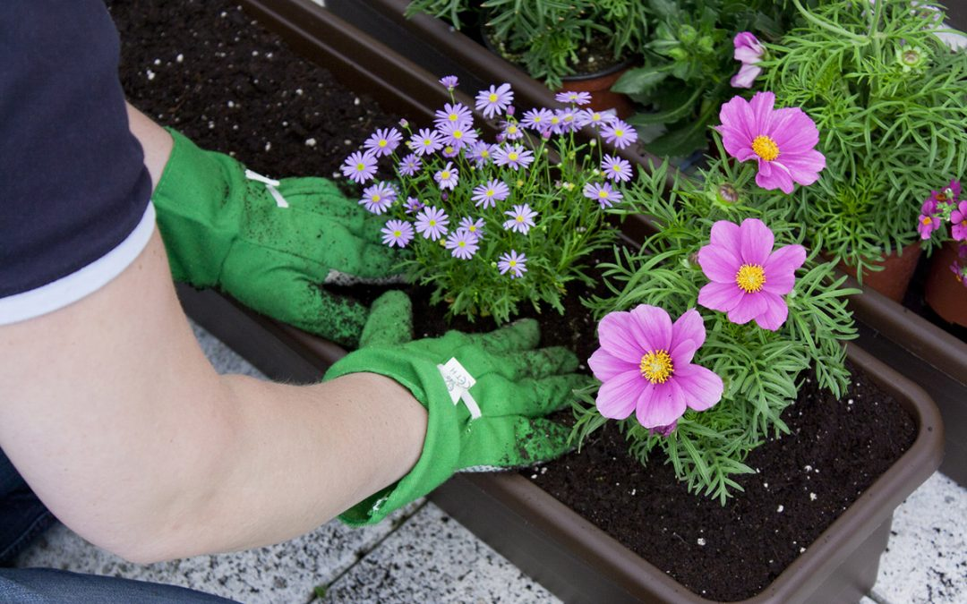 BALCONY FLOWERS 🌸 Tips For planting, care & irrigation
