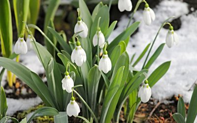 TIPS for your garden in February