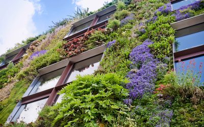 Vienna is blooming! Green facades for a better quality of life